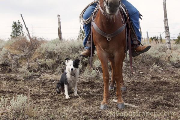 gallery_ranch_photo_gallery_MLEwk6399klrprg8.jpg