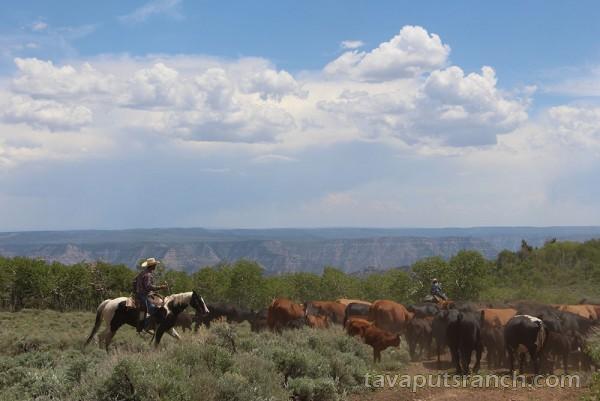 gallery_ranch_photo_gallery_pKc9wkMdB9SpZNtT.jpg