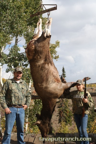 hunts_cow_elk_8FFEugp3jt49JFj6.jpg